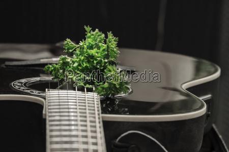 musica verde nero chitarra corde prezzemolo