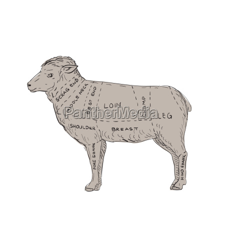vintage lamb meat cut map drawing