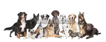 rilasciato studio di registrazione animale animale