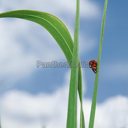 blu foglia estate scarafaggio compagno canna
