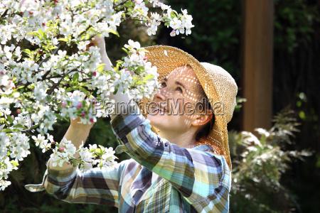 albero di mele fiorito primavera nel
