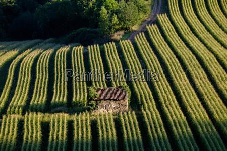 viaggio viaggiare agricolo colore agricoltura campo