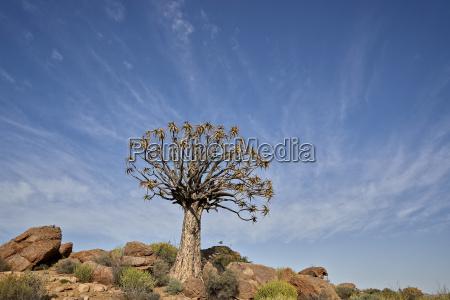 blu viaggio viaggiare colore albero africa