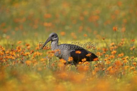 viaggio viaggiare colore uccello parco nazionale