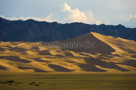 khongor els sand dune gobi cammelli