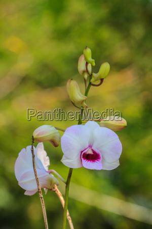 bello bella fiore pianta fioritura fiorire
