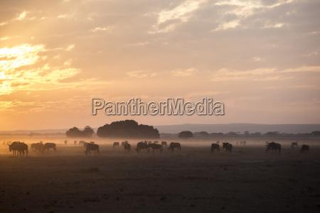 tramonto kenia orizzontale allaperto semplice mandria