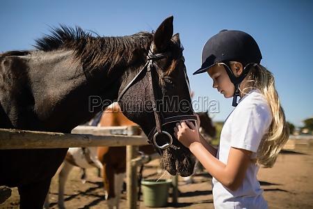 ragazza che accarezza il cavallo marrone