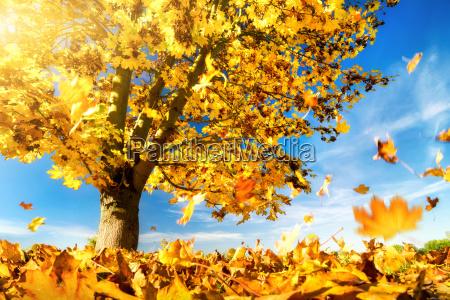 foglie gialle cadono a terra albero