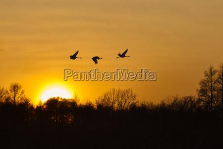 animale uccello asia tramonto sognante stato
