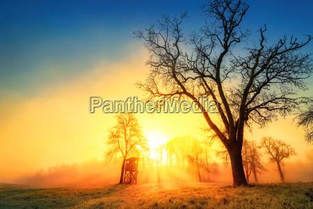 albero inverno nebbia alba prato paesaggio