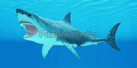 grande squalo bianco sottacqua