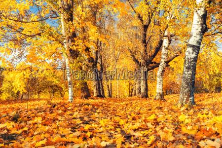 autunno soleggiato nel parco