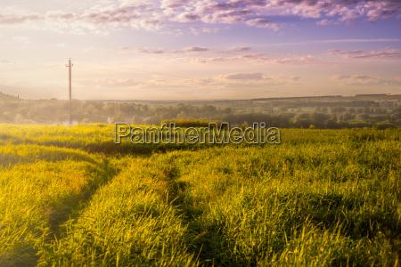 albero campo sguardo vista paesaggio natura