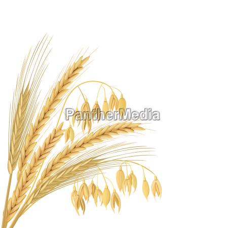 quattro grani di cereali con orecchie