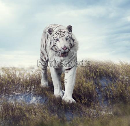 blu andare enorme animale mammifero fauna