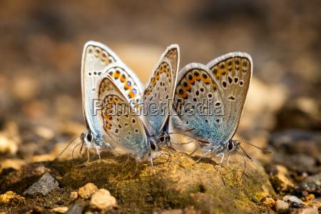 molte farfalle graziose con le ali