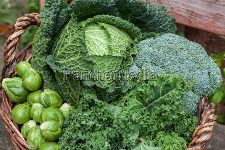 cibo salute primo piano inverno vendemmia