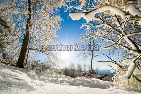 albero alberi inverno paesaggio invernale neve