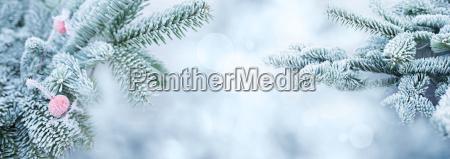 blu inverno abete argento ramo biancospino