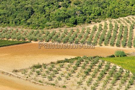 albero legno marrone agricoltura campo europa