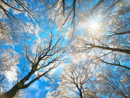 foresta in inverno con cime degli