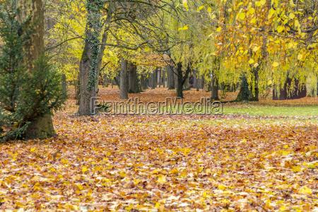 corridoio foglia albero parco legno tronco