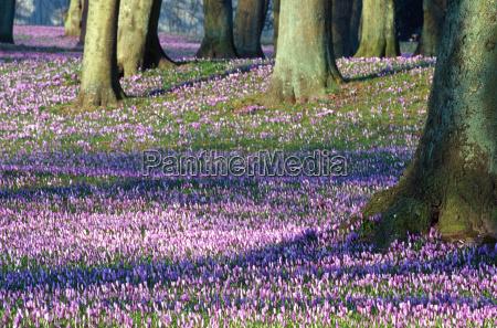 drzewo drzewa rozkwitac kwitnienie kwiaty bluetenpracht