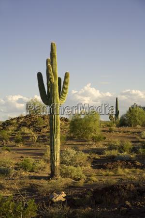 monumento deserto stati uniti damerica usa