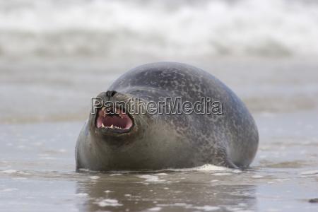 animale mammifero fame animali acqua mare