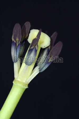 primo piano close up rilasciato fiore