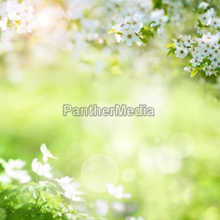 paesaggio primaverile con fiori di ciliegio