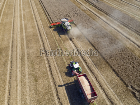 aerial view of wheat field being