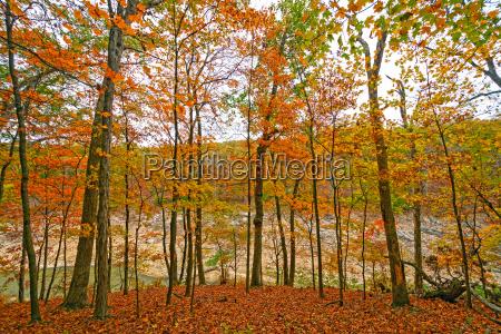 colori autunnali su una cresta appartata