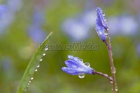 detail liquid closeup flower plant bloom