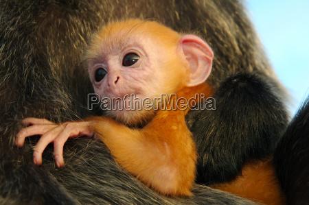 primo piano animale mammifero fauna asia