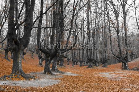 viaggio viaggiare colore inverno parco nazionale
