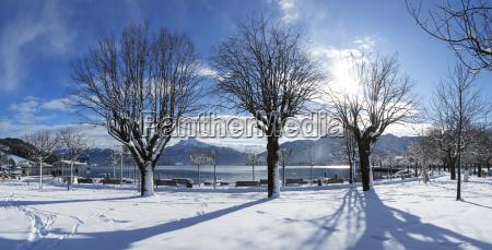 albero inverno nuvola austria allaperto fotografia