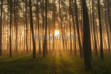 bello bella albero selvaggio sognante pino