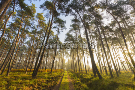 percorso attraverso alberi silhoueted in una