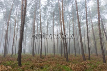 alberi in una pineta in una