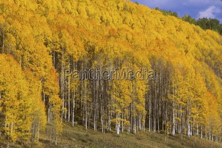ambiente albero alberi turismo stati uniti