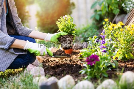 giardiniere che pianta i fiori nel