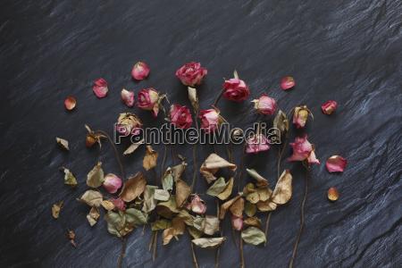 natura morta foglia colore emotivo fiore