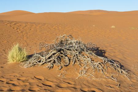 deserto africa namibia giro turistico visita