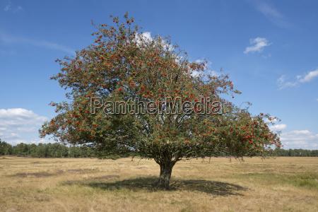 staccato albero alberi albero caduco alberi