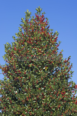 blu giro turistico arbusti europa frutta