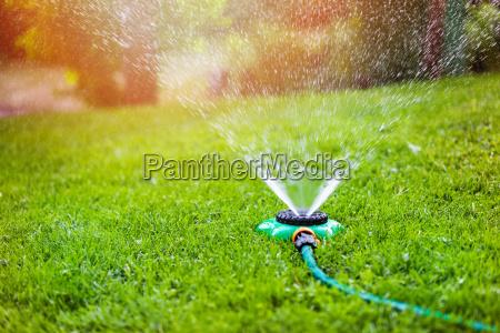 spruzzatore del giardino che innaffia erba