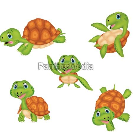 set di raccolta di tartarughe dei