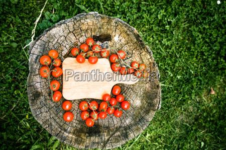 cibo spezia albero giardino legno foglie